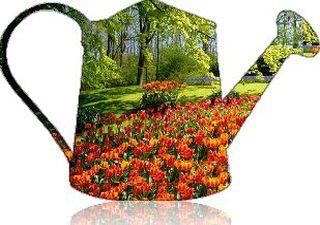 giardini-bellissimi-laspesa (1)