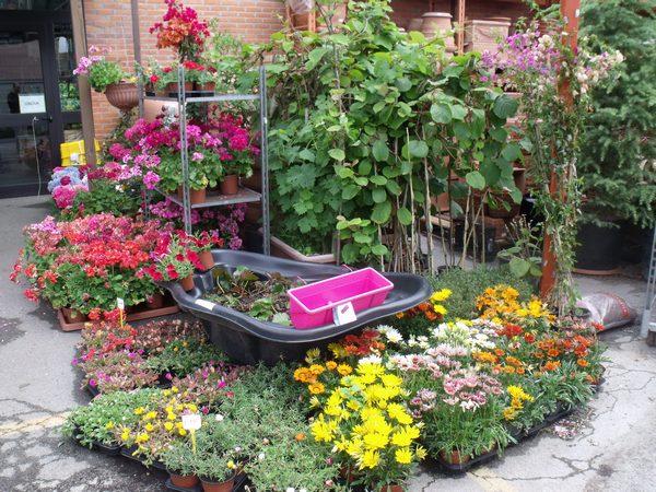 laspesa-orto-piante1